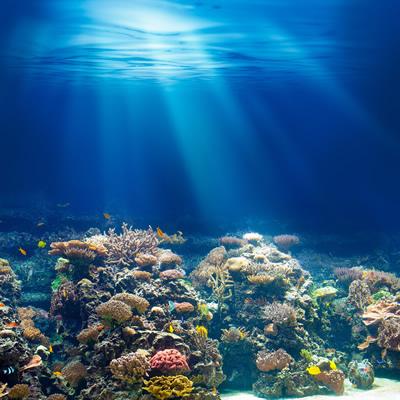 ダイビングで見る海の底